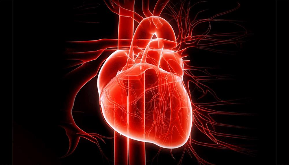 70enni, il cuore invecchia più lentamente rispetto a 10 anni fa