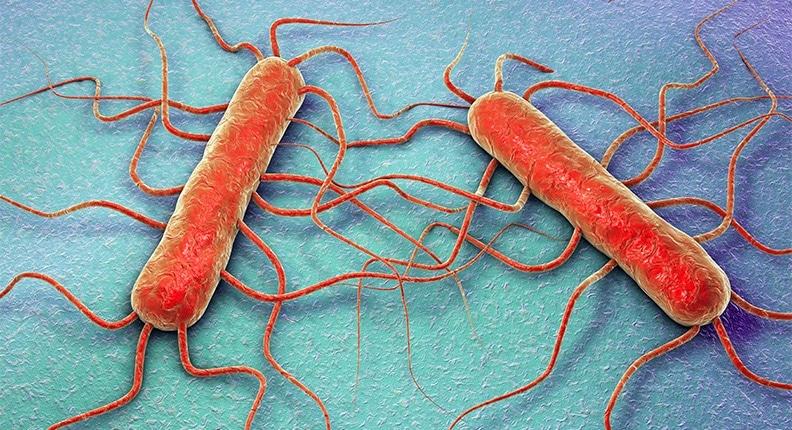 Alimenti contaminati: ecco come evitare il rischio listeria